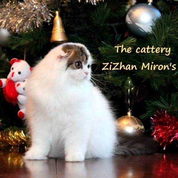 ZiZhan Miron's