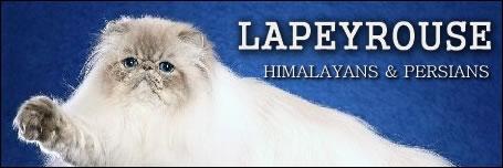 Lapeyrouse Himalayans & Persians