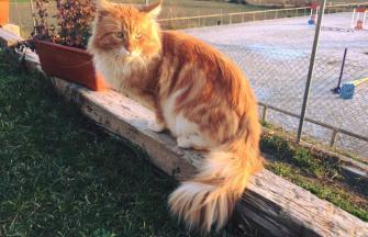 Garfield de Guilladecoon