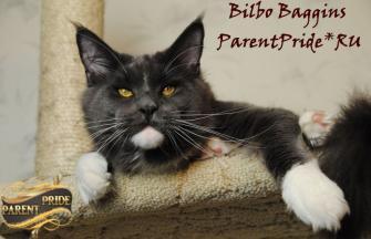 Eur.Ch.Bilbo Baggins ParentPride*RU
