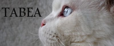Tabea cattery