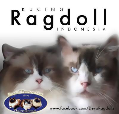 Deva Ragdolls