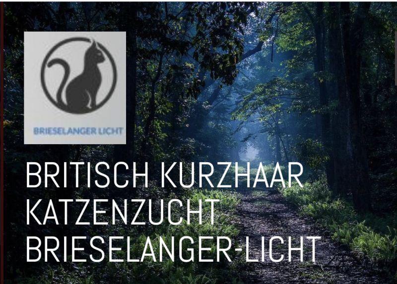 BKH-Brieselanger-Licht