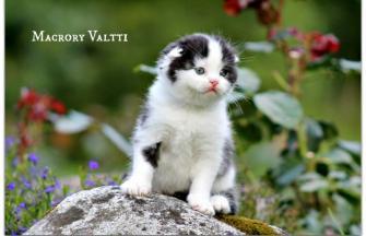 Macrory Valtti